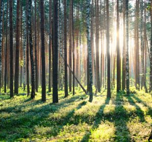Trees on the woods with a sunlight